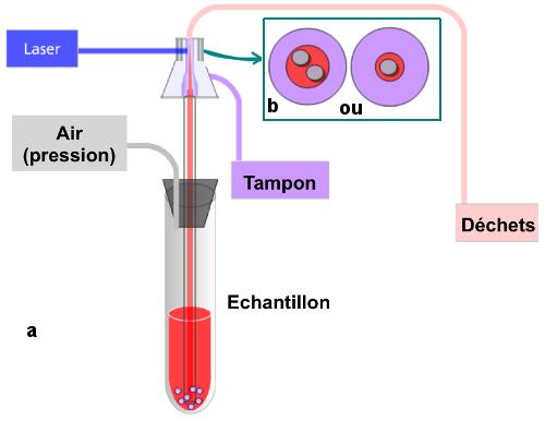 La circulation des fluides dans l'appareil et le trajet de la lumière.