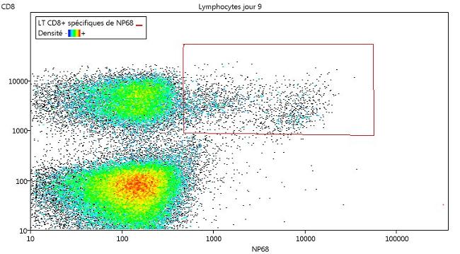 Délimitation des lymphocytes T cytotoxiques qui reconnaissent le peptide NP68 du virus de la grippe au jour 9.
