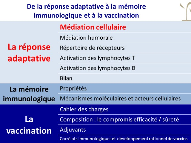 Médiation cellulaire