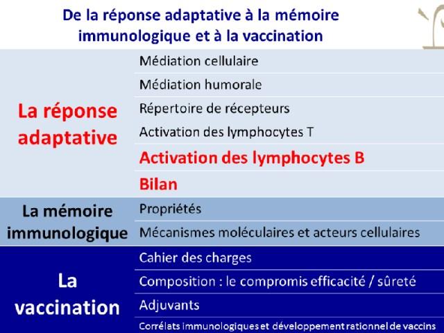 Activation des lymphocytes B et bilan
