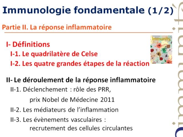 Le déroulement de la réponse inflamatoire