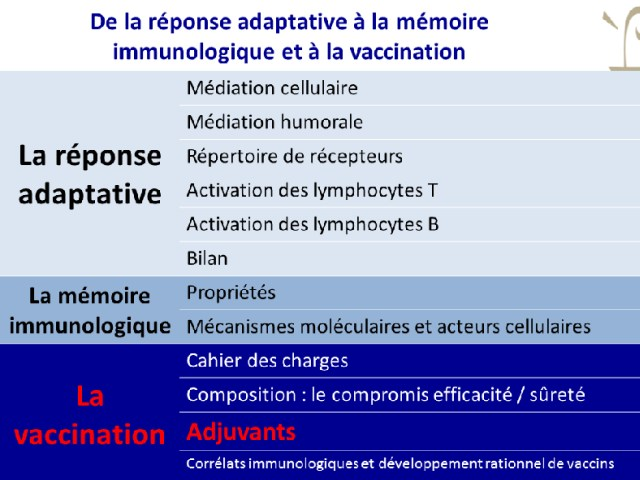 Les adjuvants