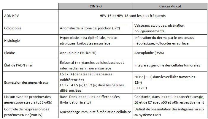 Histologie de l'endocol, de la zone de jonction et de l'exocol.