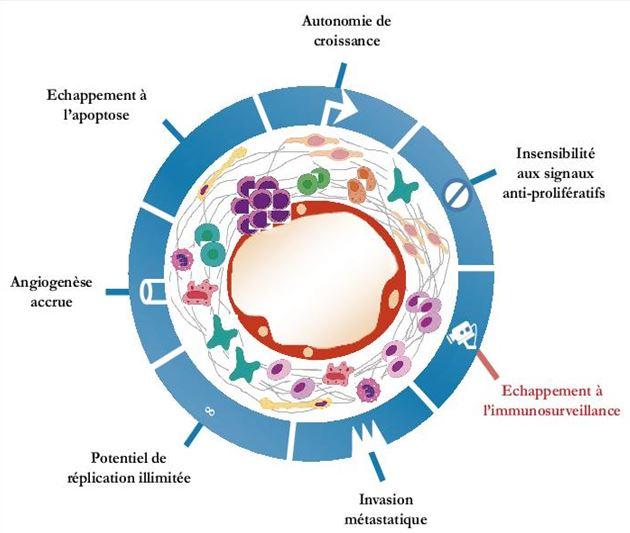 Les sept propriétés fondamentales d'une cellule tumorale.