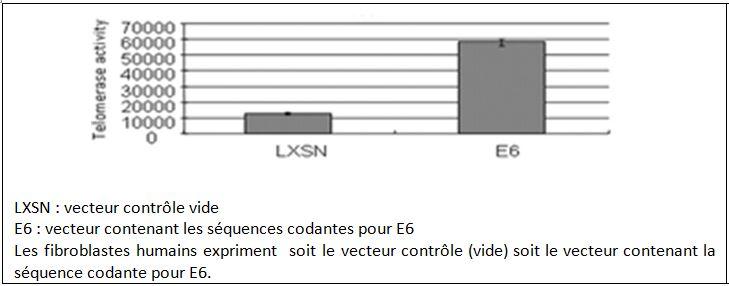 Effet de l'oncoprotéine E6 sur l'activité télomérase.