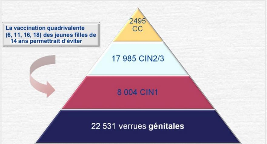 Bénéfices attendus de la vaccination quadrivalente en France.