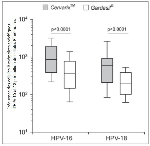 Comparaison des vaccins Gardasil® et Cervarix® en terme de production de cellules B mémoires spécifiques d'HPV-16 et 18.