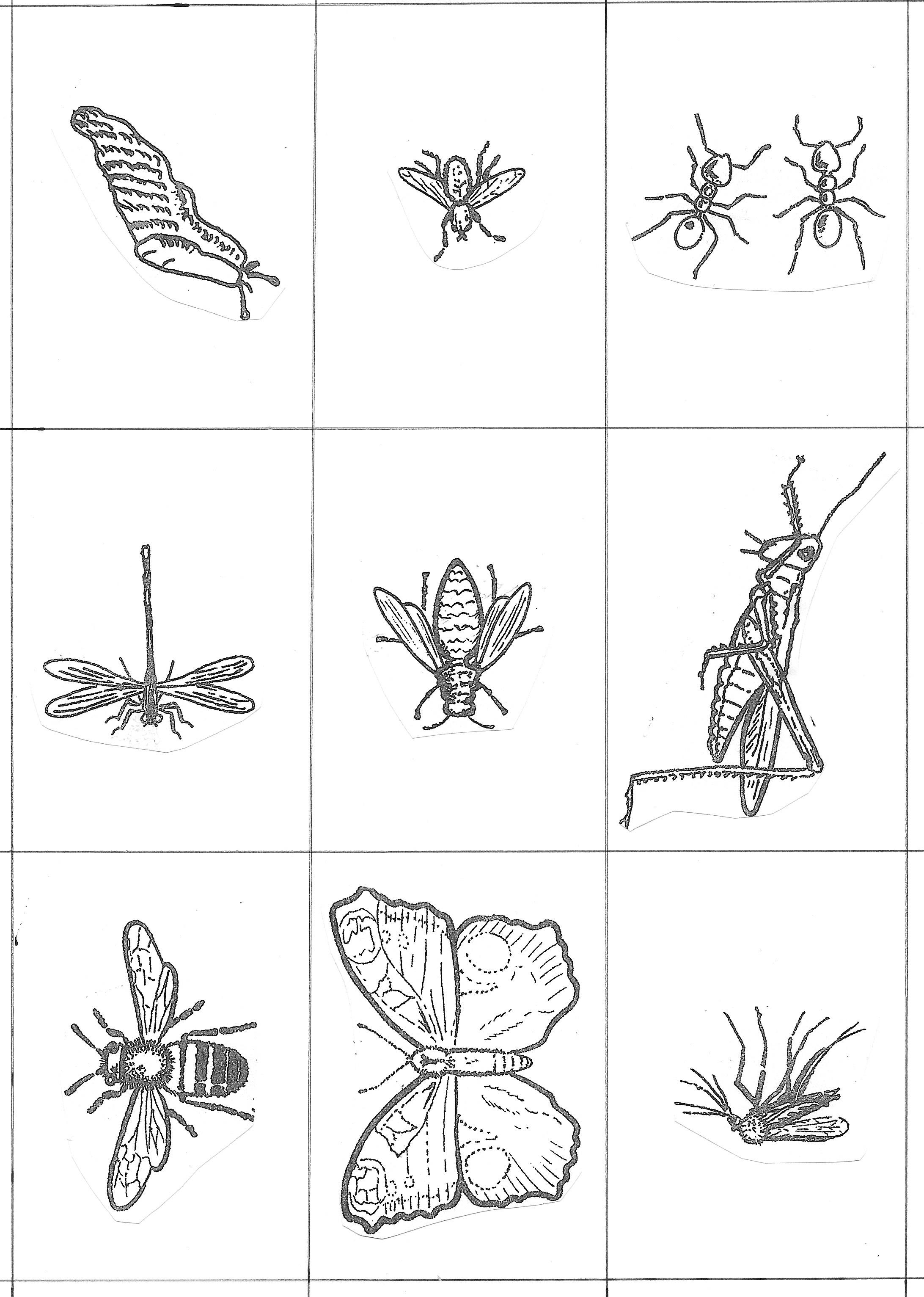Cartes dessins lignes claires n°1