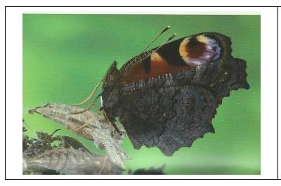 Le Papillon suite