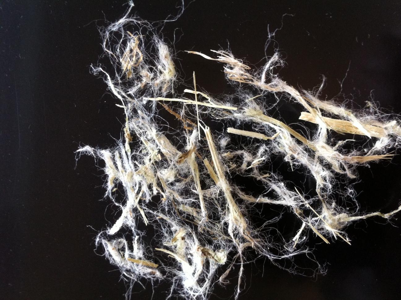 Fibres de cellulose extraites après battage des tiges d'orties séchées