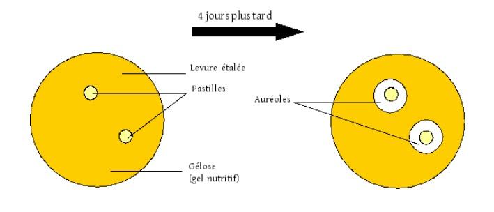 schéma d'interprétation