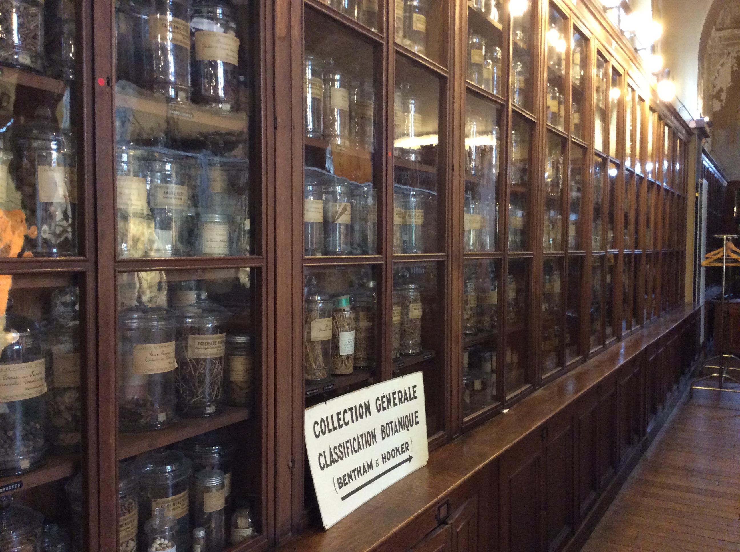 Vitrines : Collection de Matière médicale